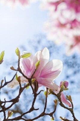 Obraz Magnolienblüte