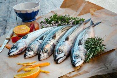 Obraz makrely