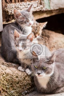 Malé koťata s mámou v Toskánsku