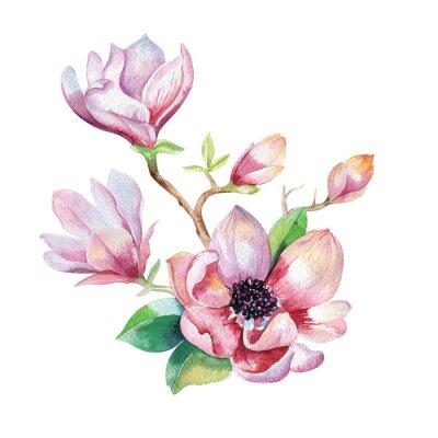 Obraz Malování Magnolia květy tapety. Ručně tažené akvarel květinové