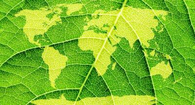 Obraz Mapa světa, světadíly na zelený list na pozadí.