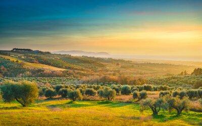Obraz Maremma sunset panorama. Countryside, sea and Elba on horizon. San Vincenzo, Tuscany, Italy.