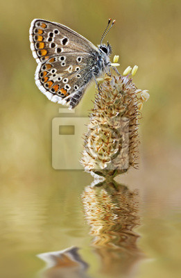 Obraz mariposa en la flor del Río