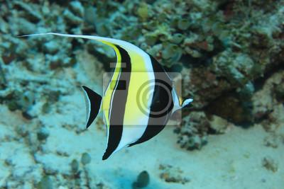 Obraz Maurské idolové ryby