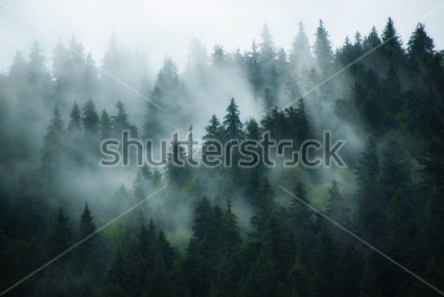 Obraz Misty landscape with fir forest in hipster vintage retro style