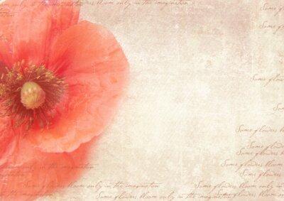 Obraz Mizerná retro pozadí s květy máku. Ročník stylizovaný koláž s mákem květiny, vybledlé rukopis na ošuntělé starý papír. Pohlednice šablony.