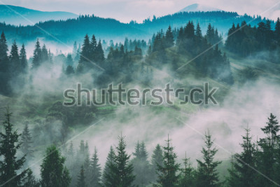 Obraz Mlžná karpatská horská údolí po dešti. Grunge ročník stylizace.