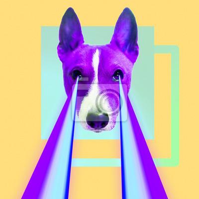 Módní bederní pes s duhové lasery z očí. Zvířecí vtipné koláž umění