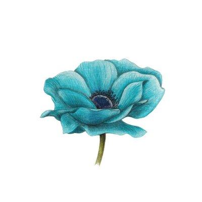 Obraz Modrá sasanka