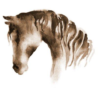 Obraz Mokrý akvarel hlava koně. Ručně malované hnědé koně na bílém.