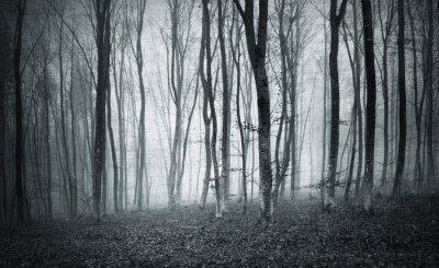 Obraz Monochromatické černá a bílá grunge texturou barva mlha mystik lesních stromů krajiny.