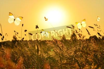 Obraz Motýl a letní louka