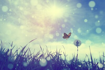 Obraz Motýl a pampeliška