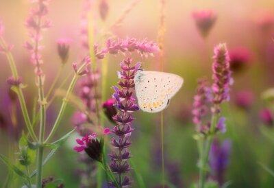 Obraz Motýl na divoké květiny