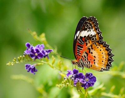 Obraz Motýl na fialový květ