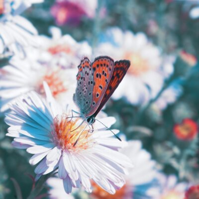 Obraz Motýl na květu