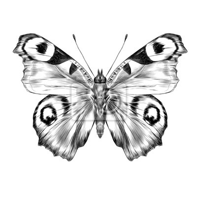 Motyl S Otevrenymi Kridly Pohledu Shora Symetricke Kresby Grafiky