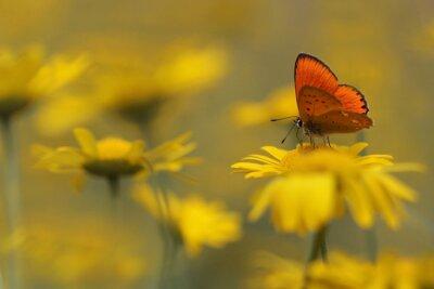 Obraz motýl v zahradě