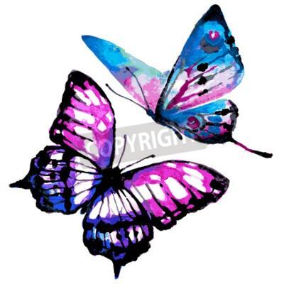 Obraz motýli designu