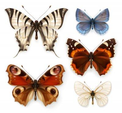 Obraz Motýly, vektor ikony sady