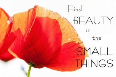 Obraz Najít krásu v malých věcí. inspirující motivace citát