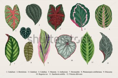 Obraz Nastavte listy. Exotika. Vintage vektorové botanické ilustrace. Barvitý.