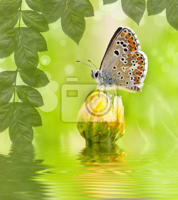 Obraz naturaleza verde