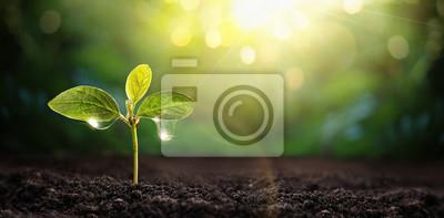 Obraz New Life Young Plant in Sunlight. Práce na zahradě