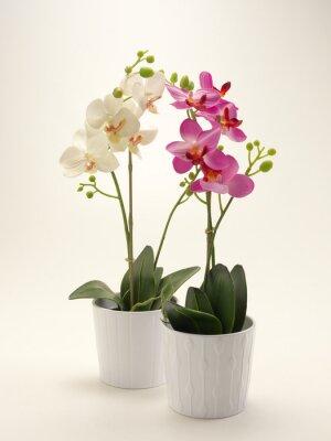 Obraz Orchidea