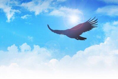Obraz Orel létání ve vzduchu