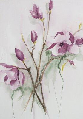 Obraz Original watercolour, magnolia flowers.