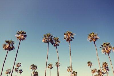 Obraz Palm Trees in Retro Style