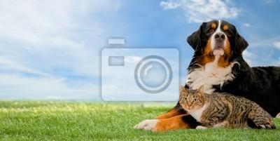 Pes a kočka přátelé spolu na trávě