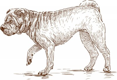 Obraz pes na procházce