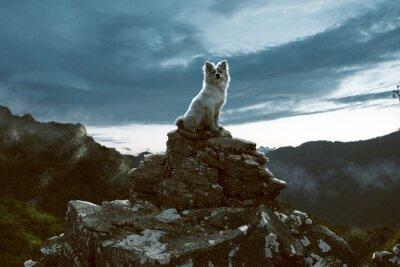 Obraz Pes sedí na skále v horách