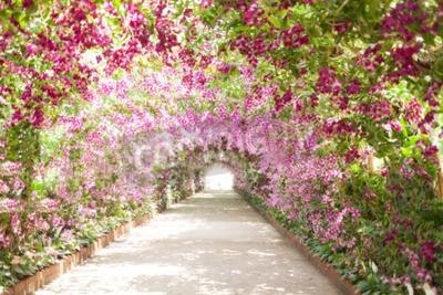 Obraz pěšina v botanické zahradě s orchidejemi, které lemovaly cestu.