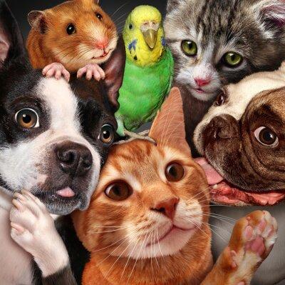 Obraz Pet Group
