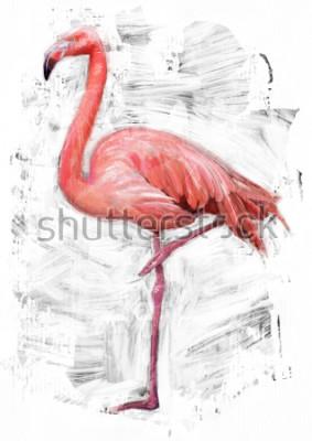 Obraz plameňák ptačí skica / olej barva malba