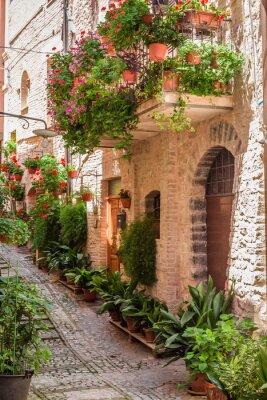 Plná květin Streer v malém městečku, Itálie, Umbrie