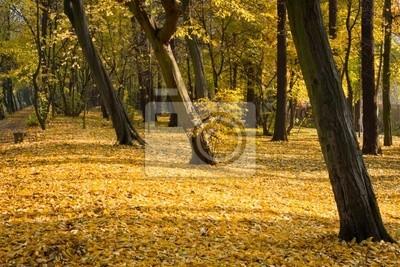 Podzim v parku v dopoledních hodinách