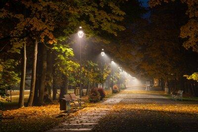 Obraz Podzimní alej v parku v noci v Konstancinu Jeziorna, Mazowieckie, Polsko