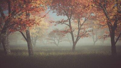 Obraz Podzimní les v mlze.