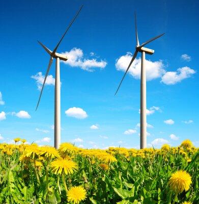 Obraz Pole pampelišky s větrnými turbínami. Čisté energie.
