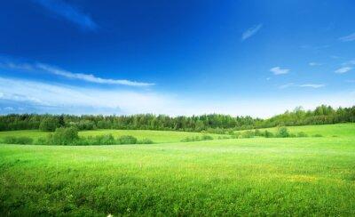 Obraz pole trávy a perfektní nebe