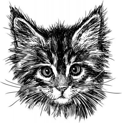 Obraz portrét kočky