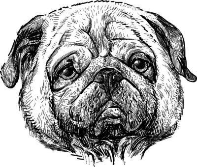 Obraz portrét mops