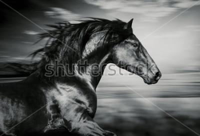 Obraz portrét španělského běžícího koně, černé a bílé fotografie