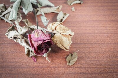 Obraz Poslední Valentine růže.