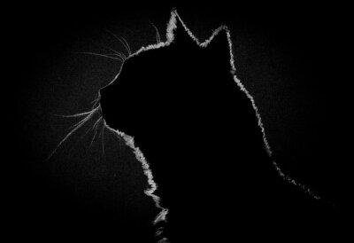 Obraz Profile kočka ve tmě