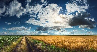 Obraz Pšenice a kukuřice pole před sklizní